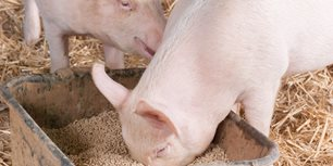 Harvest Time Provides Opportunity to Reflect On Swine Industry
