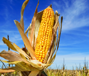 AEM Welcomes Higher Corn Ethanol Levels for 2017